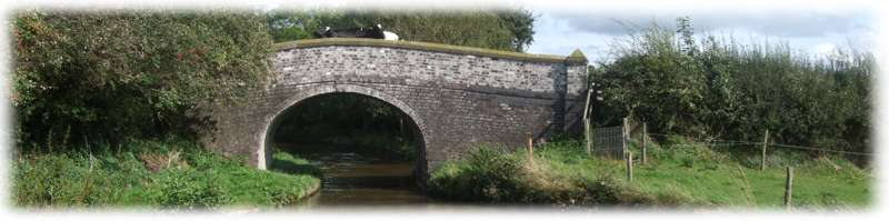 Cows on the bridge - Llangollen Canal